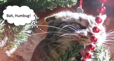 9 Signs You're a Holiday Decorating Disaster…